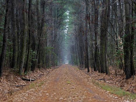 Loblolly Lane by Robert Geary