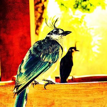 Loco Bird by Marc VanDermeer