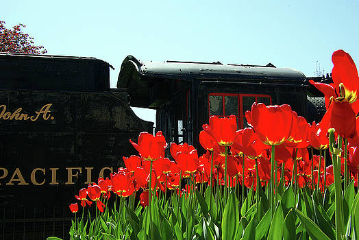 Locomotive 1095 and Red Tulips by Paul Wash