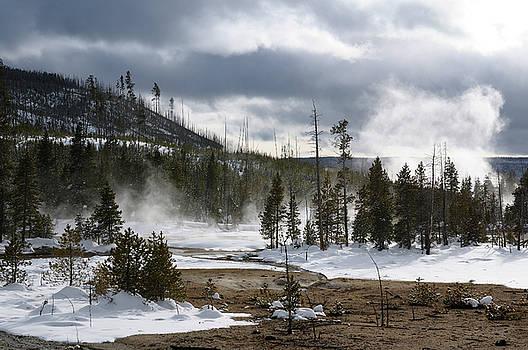 Reimar Gaertner - Lodgpole Pine forest in steaming Back Basin of Norris Geyser Bas