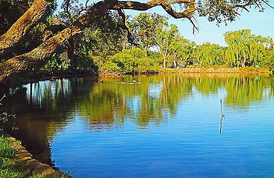 Lodi Lake Morning Shadows And Reflections by Joyce Dickens