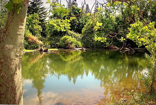Joyce Dickens - Lodi Lake Reflections Two