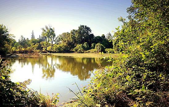 Lodi Pig lake Reflections by Joyce Dickens