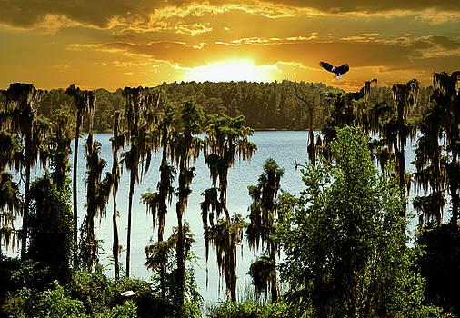 Lofty Landing by Adele Moscaritolo