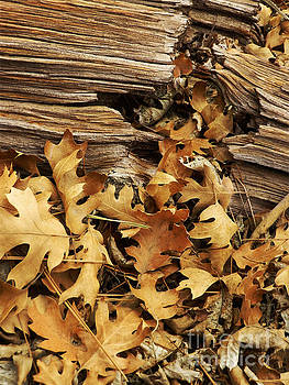 Log and Leaves by Robert Ball