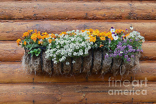 Log Cabin Flower Planter by Catherine Sherman