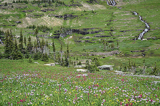 Logan Pass Wildflowers in Glacier National Park 1.2 by Bruce Gourley
