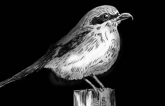 Loggerhead Shrike by Olga Kaczmar