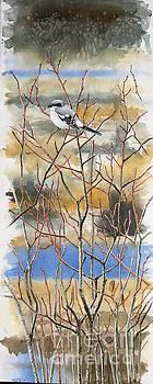 Loggerhead Shrike by Scott Rashid