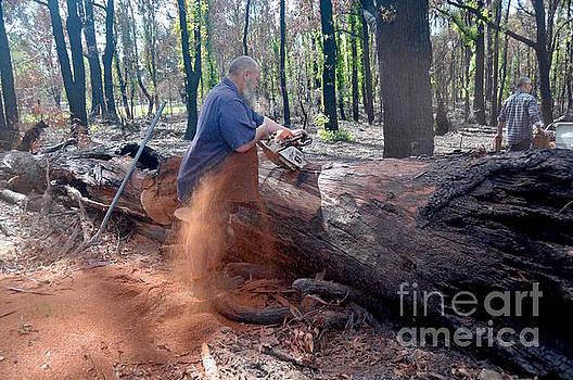 Logging Terry. Forest Worker by Hans Peter Goepel