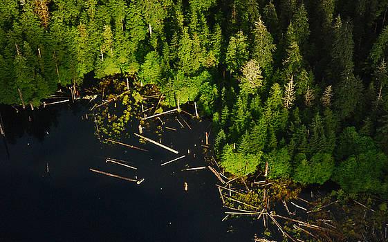Logging Remnants by Preston Zeller