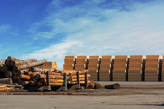 Logs and Plywood at Lumber Mill by David Gn