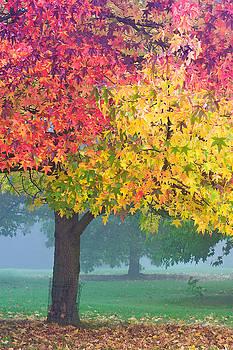 London autumn by David Bleeker