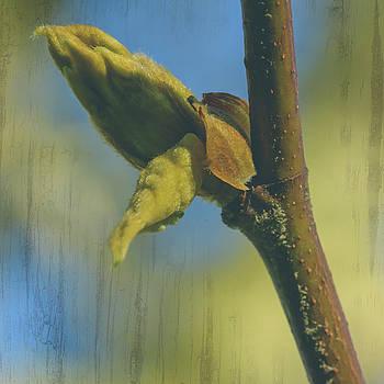 Jacek Wojnarowski - London Plane Buds B - Platanaceae Fine Art