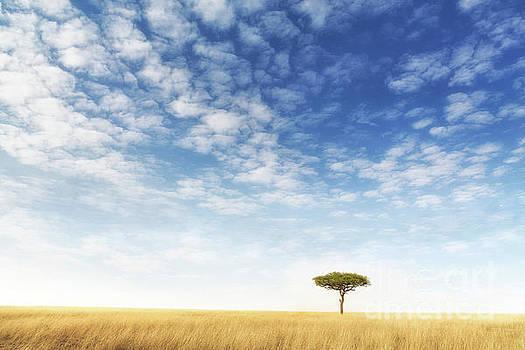 Lone acacia tree in the Masai Mara by Jane Rix