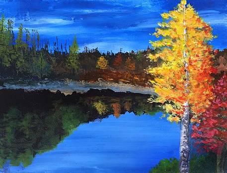 Lone Birch by J Travis Duncan