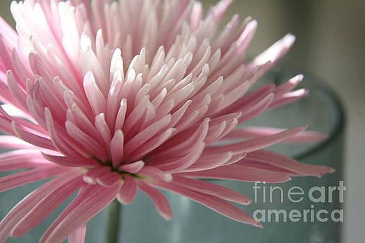 Lone bloom by Lynn England