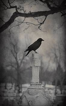 Lone Cemetery Blackbird by Gothicrow Images