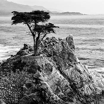 Guy Shultz - Lone Cypress