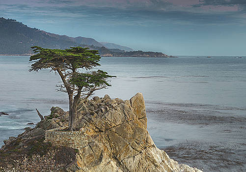 Lone Cypress by LiveforBlu Gallery