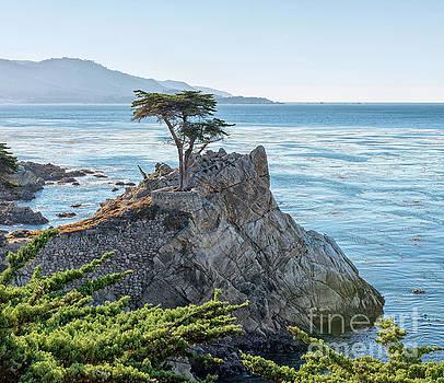 Lone Cypress by Mark Chandler