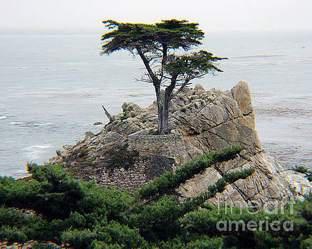Lone Cypress by Michael Lovell