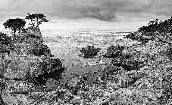 Jamie Pham - Lone Cypress Panorama
