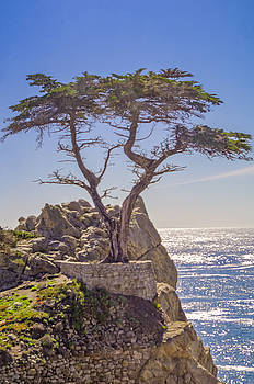 Tony Crehan - Lone Cypress - Pebble Beach - California - USA