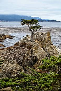 Lone Cypress by SoxyGal Photography
