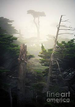 Lone Cyprus Tree by Craig J Satterlee