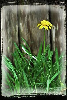 Lone Daisy Art by Kaye Menner by Kaye Menner
