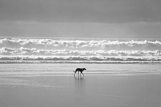 Lone Dog by the Ocean by Richard Hinds
