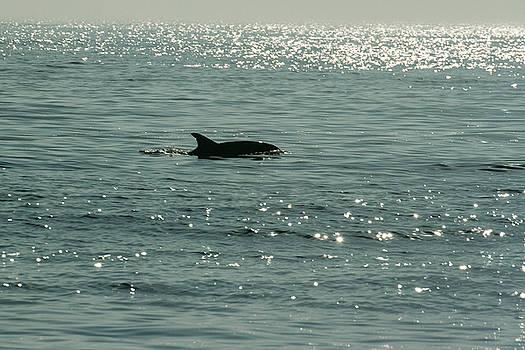 Allan Levin - Lone Dolphin