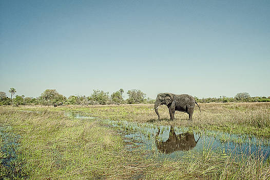 Lone elephant and the distant herd by Justin Carrasquillo