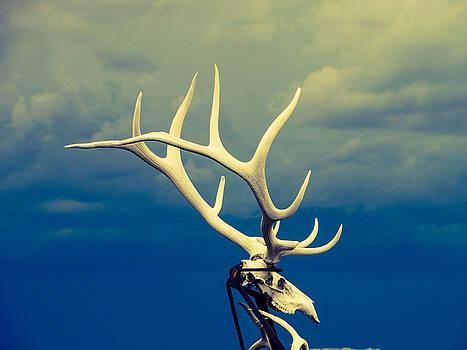 Lone Elk by Robert Lowe