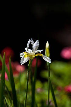Lone Flower by Walt Stoneburner