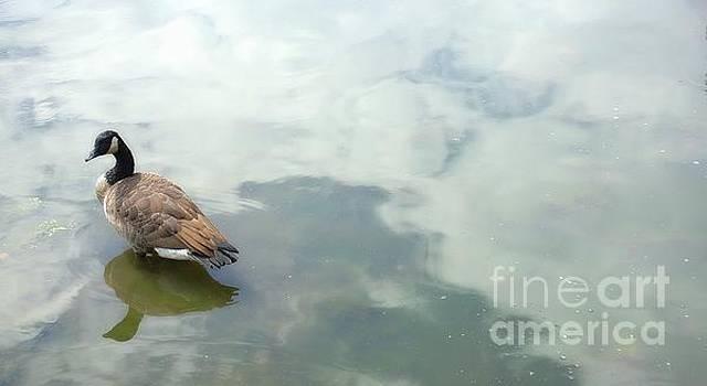 Lone Goose by Lilliana Mendez