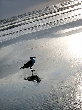 Lone Gull by John Winner