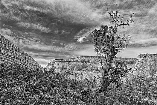 Lone Juniper BW by Mitch Johanson