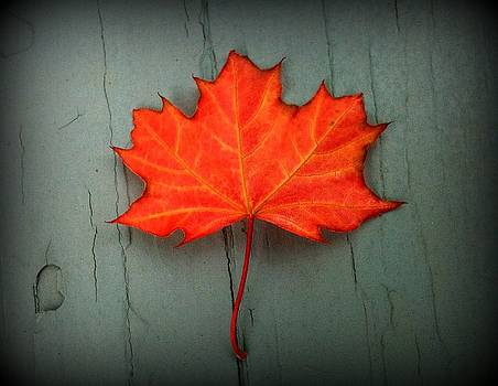 Lone Leaf by Suzanne DeGeorge
