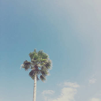 Lone Palm by Cassia Beck