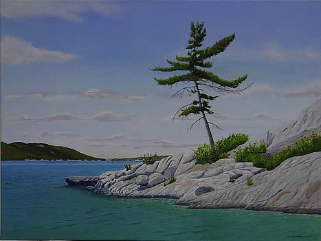 Lone Pine on Bay Finn by Doug Goodale