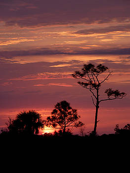 Lone Pine Sunset by Susan Duda