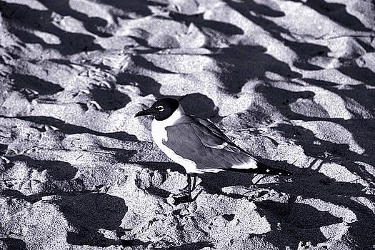 Lone Seagull by Gary Dean Mercer Clark