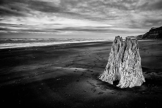 Lone Stump by Russ Dixon