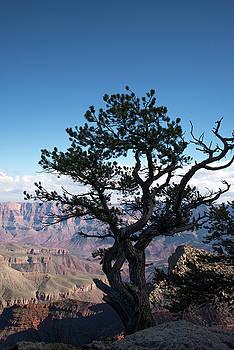 Lone Tree 2 by Frank Madia