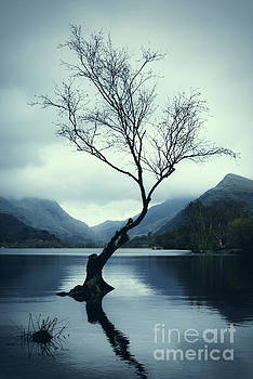 Lone Tree by Amanda Elwell