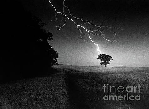 Lone tree and lightning by Damian Davies