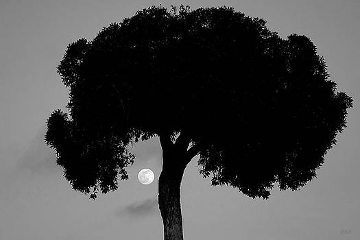 David Gordon - Lone Tree and Rising Moon BW