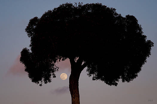 David Gordon - Lone Tree and Rising Moon